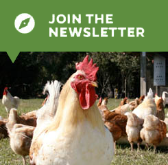Join the Newsletter button with picture of a rooster