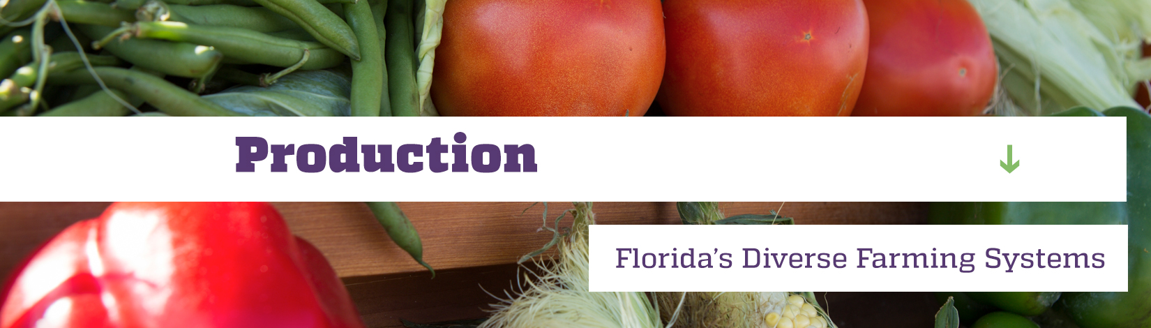 Production-Managing Florida's Diverse Farming Systems